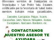 FUMIGACIONES Y CONTROL DE INSECTOS EN TEGUCIGALPA Y SAN PEDRO SULA