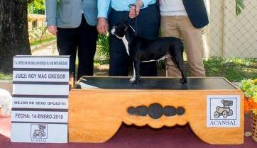 Padre campeón de belleza canina